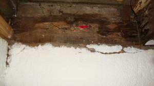 termite.247130721_large